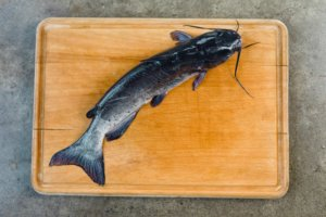 Got To Be NC | Sustainable Aquaculture And Catching Your Own