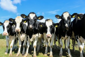 Funds For Dairy Assistance