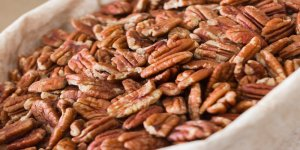 NC Pecan Growers Expect Plentiful Crop
