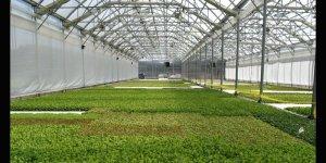 NC Greenhouse